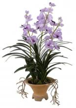 BLUE-BLOODED NOBILITY ORCHID
